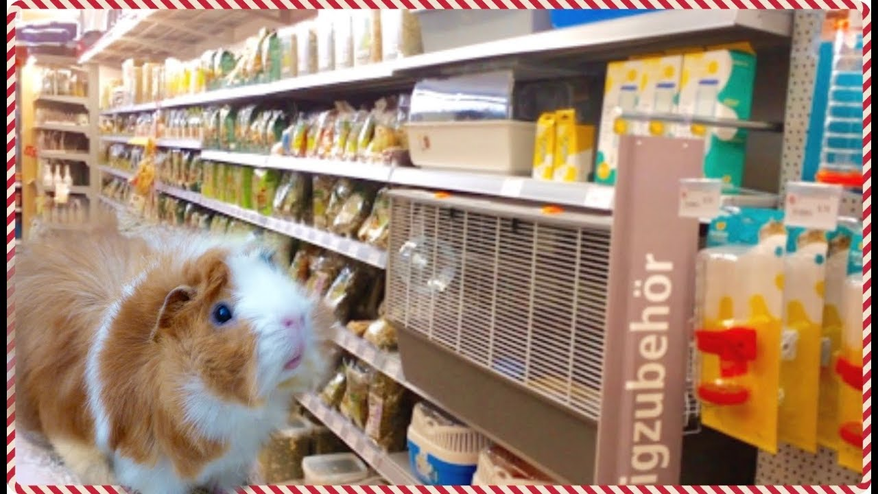 Vlog Going to the Pet Store Buying Guinea Pig Supplies