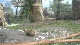 Zoo Opole - jak wygląda wybieg piesków preriowych?