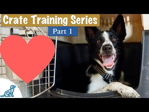 Crate Training A Puppy (So They LOVE Their Crate) - Professional Dog Training Tips