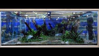 HUGE PLANTED TANK - 10000L [HD]
