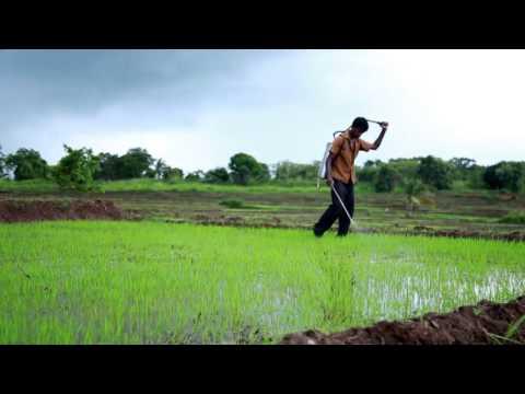 How to Use Biofilm Biofertilizer for Paddy / Rice 720P (Sinhala)