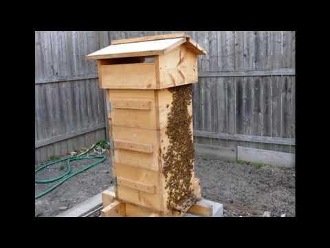 японский улей или улей Варрэ Безрамочное содержание пчёл   Пчеловодство выходного дня