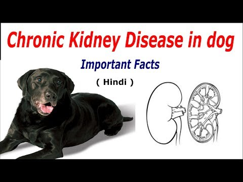 Kidney Disease In Dog : Important Facts
