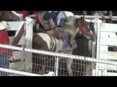 Cowtown Rodeo Horses Sent to Slaughter