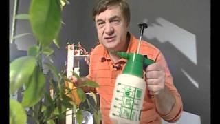 Как помочь лимону(Андрей Туманов о том как выходить лимон., 2011-08-09T09:47:15.000Z)