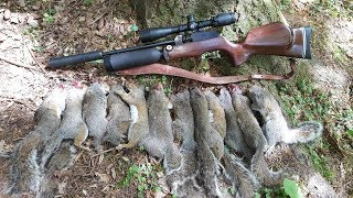 Pest Control with Air Rifles - Squirrel Shooting - Predator Polymag Shorts .22