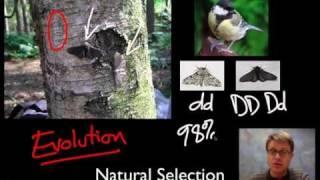 unit 1 review natural selection