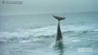 Влюблённый дельфин и собака