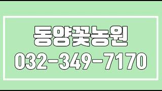 동양꽃농원,부천꽃배달서비스,부천꽃바구니,부천화환