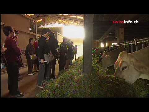 Japanese learn about Swiss farming