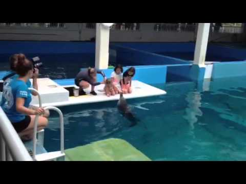Clearwater Marine Aquarium, Clearwater Fl