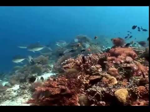 Подводный мир 3 футаж