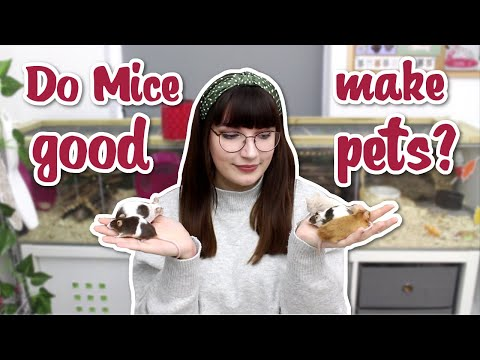 Do Mice Make Good Pets?