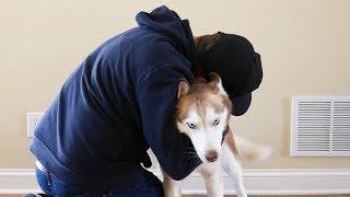 Hugging my Husky for too long (SHE TALKS BACK!)