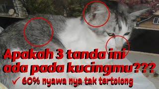 3 TANDA MENDASAR KUCING TERKENA VIRUS || MIKO Family