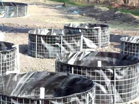 Tilapia en tanques de geomembrana tangeomex youtube for Estanques de geomembrana para tilapia