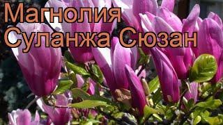 видео Магнолия Сьюзан (Magnolia susan) купить, продажа саженцев магнолии морозостойкой