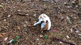 安曇野の「山登りねこ、ミュー」初冠雪の滝沢城址❻ thumbnail
