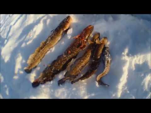 Красноярское море, залив Кривляк. Второй день.