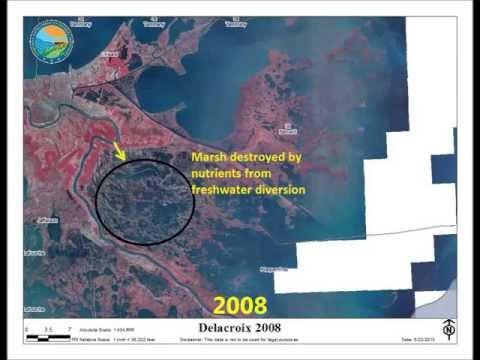 Nutrient damage to Louisiana Marshes