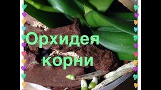 Орхидеи - корни(, 2015-04-03T09:27:40.000Z)