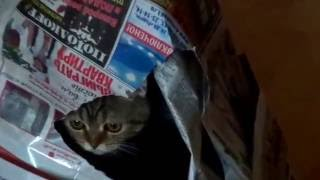 кошкин шалаш