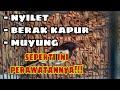 Mengatasi Kacer Nyilet Di Jamin Sembuh  Mp3 - Mp4 Download