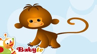 Monkey - Animal Sounds and Names for Kids & Toddlers | BabyTV
