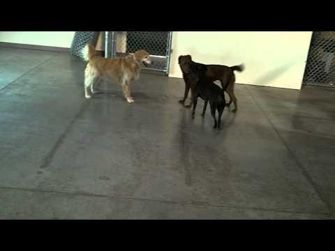 Even Older Pups wanna play