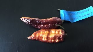 Chili Pepper (Organism Classification)