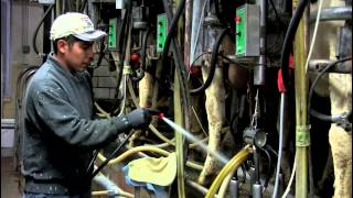 Reed's: The Making of a Dairy Farm Documentary (Idaho Falls, Idaho)