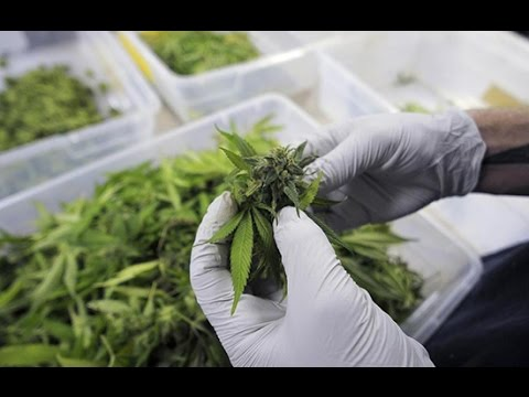 Clinical Application of Cannabinoids and Terpenes | M. Gordon, Cannafest 2015