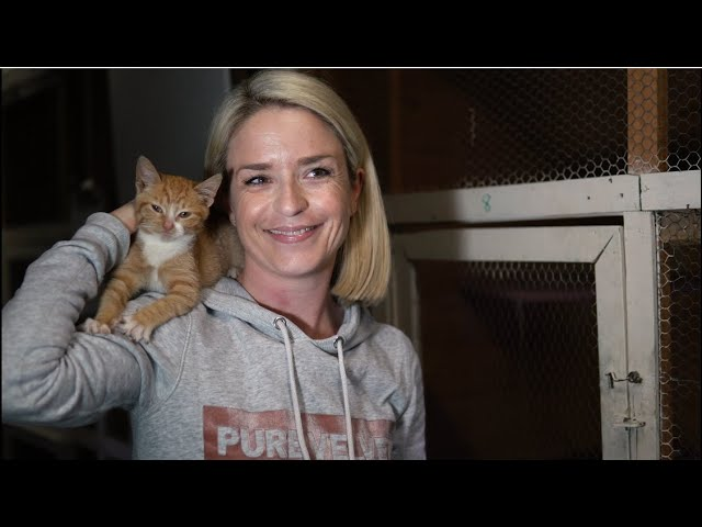 Volunteer Dedicates Her Life To Help Homeless Cats