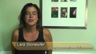 Lara's Canine Solutions Is Highly Recommended Dog Trainer & Behaviorist In San Antonio