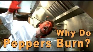 why do chili peppers burn   a moment of science   pbs