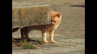 日本の景色 愛知県刈谷市洲原公園の猫Part1 The scenery of Japan Cats in Suhara park Kariya city Aichi thumbnail