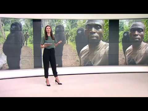 VIRUNGA-NATIONALPARK: Gorillas machen herrliches Photobombing im Kongo