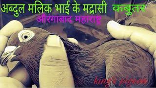 Gambar cover Abdul Malik  Bhai ke Makhiyane (sendhe)Madrasi kabutar (pigeon) Auranagabad Maharashtra.