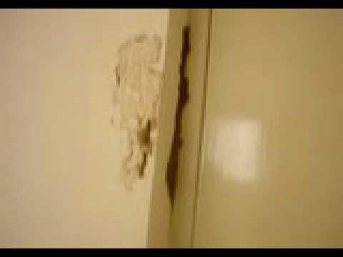 Termitas da ando pared en casa nueva guadalupe n l - Como panelar una pared ...
