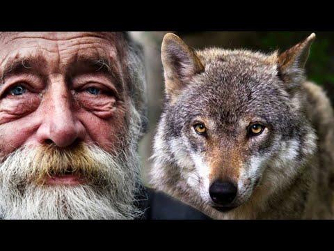 🐺 🐺 Беременная   волчица пришла за помощью к старику в деревню - Видео онлайн