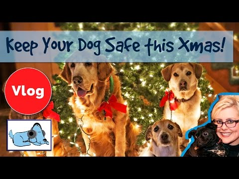 How to Keep Your Dog Safe at Christmas! Christmas Decoration Advice for Dog Owners!