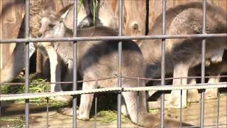 東京上野動物園の 赤ちゃんと お父さんお母さん 集団食事風景です とて...