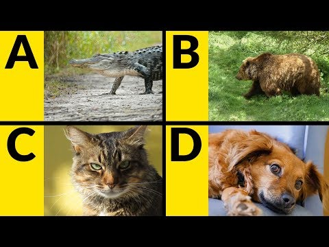 ABC Animals for Children - Learn Alphabet with Animals for Toddlers & Kids