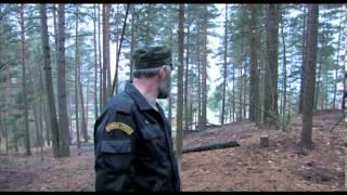 натаска и притравка западно-сибирской лайки на кабана(, 2012-12-25T08:18:19.000Z)
