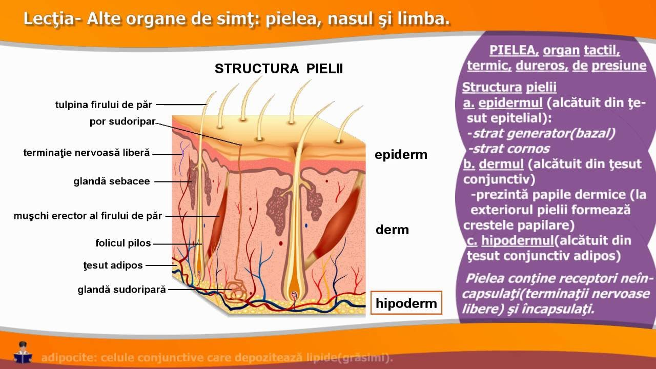 fiziologia vederii)