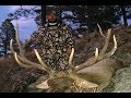 HUNTING HUGE BULLS IN NEW MEXICO