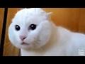 YouTube Turbo Cats Make Strange Sounds ...