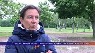 Yvelines | À Maisons-Laffitte, le centre d'entraînement pour chevaux de courses ouvre au public