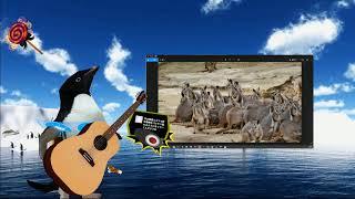 【生放送】南極一号放送局 【講義】世界一の動物写真をみんなで閲覧 小旅行で軽OG テレビへの文句