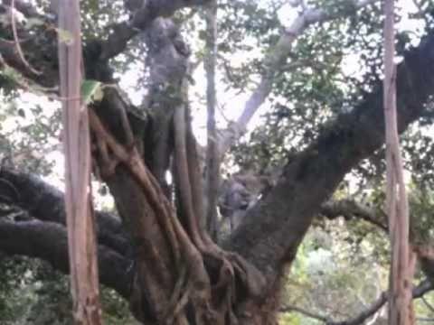 TREE BE a movie by Carmela Tal Baron Summer 2010 NYC